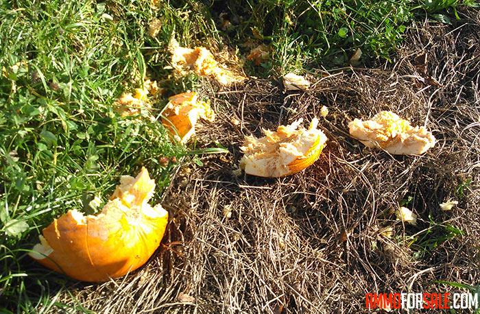 Pumpkin hit by sig sauer ammo